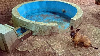 Hundebad leer