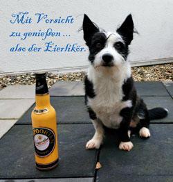 Hund Ishka mit Beruhigungsmittel Eierlikör.