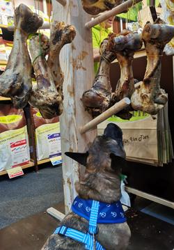 tiermesse tierisch gut 2019